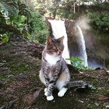 a cat visiting the waterfall stock photography