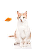 Cat vs Fish. Cat is looking a fish who is trying to escape Royalty Free Stock Photos
