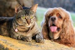 Cat vs stupid dog Royalty Free Stock Photos
