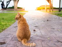 Cat wait for the owner. The cat wait for the owner to stay in the corridor with the sea as the background Royalty Free Stock Images