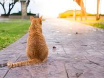 Cat wait for the owner. The cat wait for the owner to stay in the corridor with the sea as the background Stock Photos