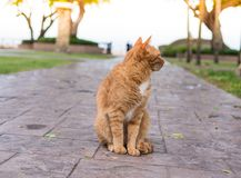 Cat wait for the owner. The cat wait for the owner to stay in the corridor with the sea as the background Royalty Free Stock Image