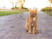 Cat wait for the owner. The cat wait for the owner to stay in the corridor with the sea as the background Stock Photography