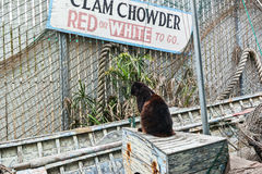 Cat waiting for clam chowder Royalty Free Stock Photography