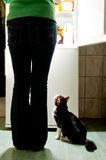 Cat waiting for a dinner. Hungry cat waiting for a meal and lick one's lips. refrigerator emit bright light. Dog feeding time Stock Images