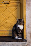 Cat waiting in the doorway. Sitting cat in the old yellow doorway, Visby Gotland Stock Image