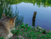 Cat waiting for fish Royalty Free Stock Image