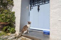 Cat waiting in front of a door. Stock Image