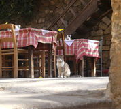 Cat waiting for guests in restaurant. Low angle view of cat sitting beside tables and chairs in Greek restaurant Stock Photos