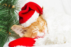 cat is waiting for the new year Stock Photos