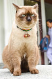Cat waiting for owners. Royalty Free Stock Photos
