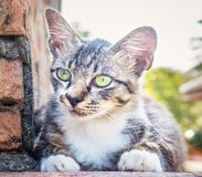 A cat is waiting for prey stock image