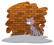 Cat waiting for the rat Stock Photography