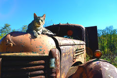 Cat waiting for a ride. Taking pictures of this abandon truck a cat jumped up and wanted her picture taken Stock Photo