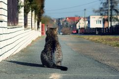 Cat waiting on the street Royalty Free Stock Photos