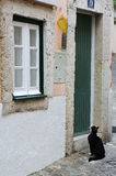 Cat waiting to open the door Royalty Free Stock Photo