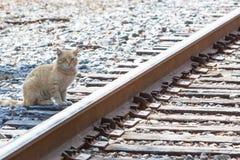 Cat Waiting voor de Trein Stock Afbeeldingen