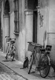 The cat waits. A cat quietly waits by the door of a store between two bicycles in a street in the center of an Italian city Royalty Free Stock Image