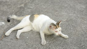 Cat wake up and walk Royalty Free Stock Photo