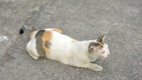 Cat wake up and walk Royalty Free Stock Photo