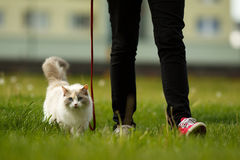 Cat on the walk. With its master in the garden royalty free stock photo