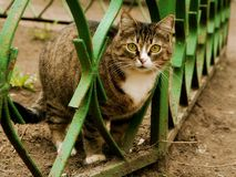 Cat on walk Stock Images