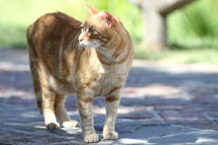 Cat walk around the garden Royalty Free Stock Images