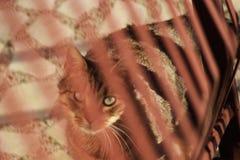Cat walk! stock images