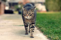 Cat walk Royalty Free Stock Photos