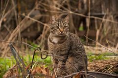 A cat on a walk outside. Sitting. A cat outside. She is sitting and looking somewhere. Outside the weather is mild. Spring Royalty Free Stock Photo