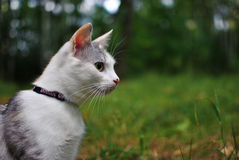 Cat on walk in the park Royalty Free Stock Photography