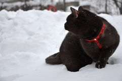 Cat on a walk in the snow Royalty Free Stock Photography