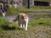 Cat walk on the street royalty free stock photos