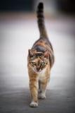 Cat Walk Stock Image