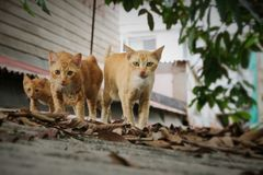 Cat, Walk, Three Royalty Free Stock Photos