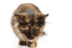 Cat walking Stock Photos