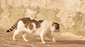 Cat walking alone Stock Photos