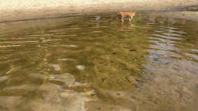 The cat is walking along the river Bank stock video footage