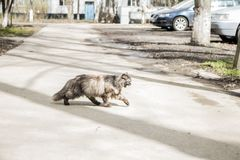 the cat is walking along the street stock photos