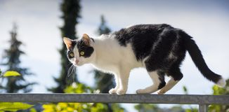 Cat is walking on a balcony banisters. A beautiful cat is walking on a balcony banisters royalty free stock photo