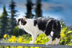 Cat is walking on a balcony banisters. A beautiful cat is walking on a balcony banisters stock image