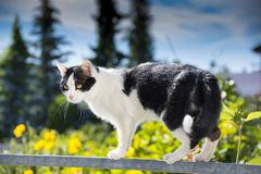 Cat is walking on a balcony banisters. A beautiful cat is walking on a balcony banisters royalty free stock photos