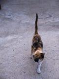 Cat Walking colorida três Imagens de Stock