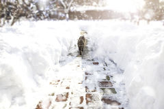 Cat walking down the alleyway during the blizzard. winter concept. Photo of Cat walking down the alleyway during the blizzard. winter concept Stock Images