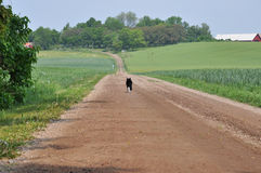 Cat walking down the road. Royalty Free Stock Photography