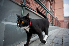 Cat walking down the street stock photo