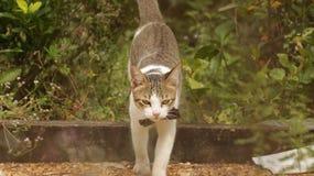 Cat Walking en jardín con el arco grande imagen de archivo