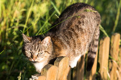 A cat walking on a fence Stock Images