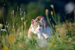 Cat. Walking in a flowers field Stock Image