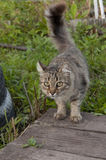 Cat walking in the garden Royalty Free Stock Photos